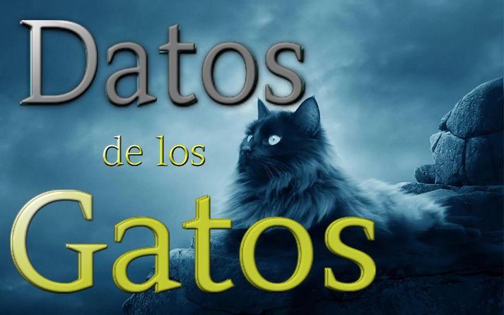 10 Curiosidades de los gatos