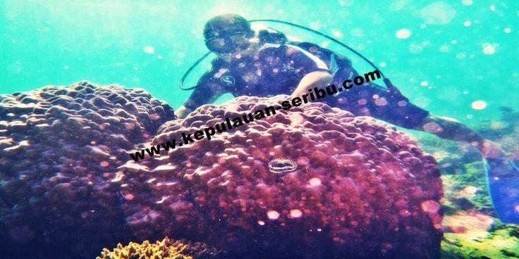 Travel Pulau Seribu jakarta indonesia kepulauan seribu wisata.Pulau Bidadari, Pulau Pantara, Pulau Kotok, Pulau Putri, Pulau Ayer, Pulau Sepa, pulau tidung, pulau macan, Pulau Pelangi, Pulau Pari, Pulau Bira, Pulau Genteng, Pulau Harapan. telp :+628159977449. Paket Wisata Pulau Seribu, http://kepulauan-seribu.com