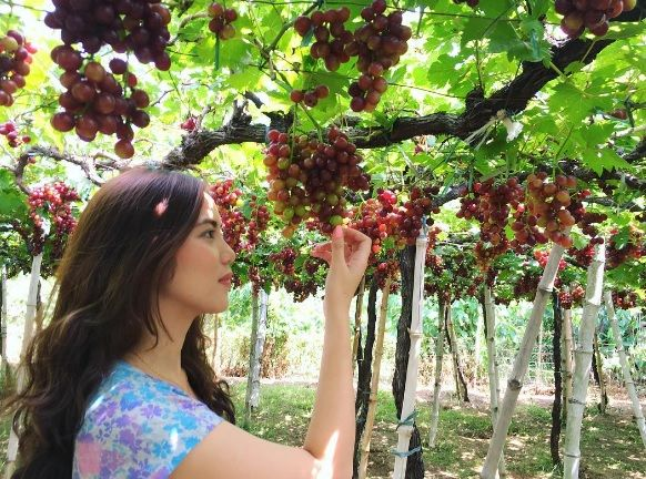 Bauang, La Union: Visiting the Grapes Capital of the Philippines