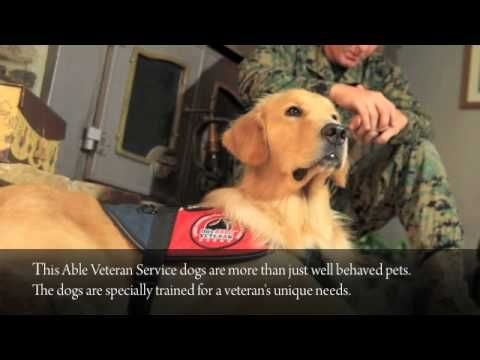 This Able Veteran - Service dogs for injured veterans