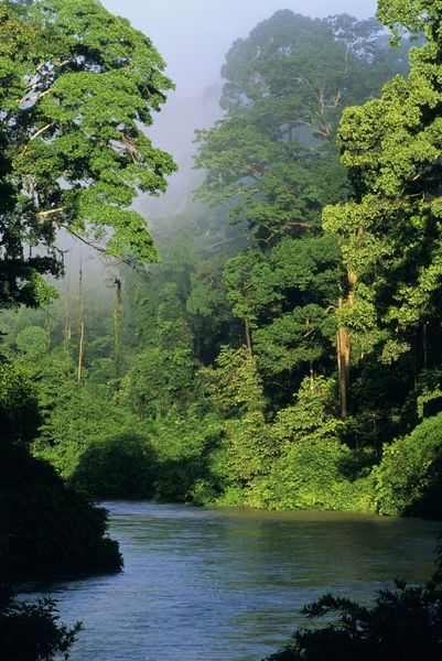 'River in lowland rainforest, Danum Valley, Sabah, Borneo' by Danita Delimont