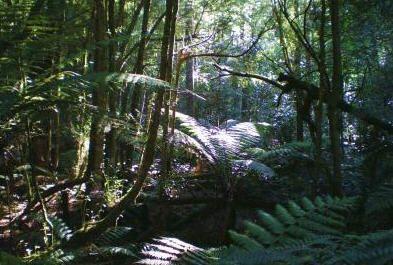 Toolangi - Wirrawilla Rainforest Walk