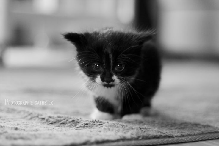 petit chat cathy LK