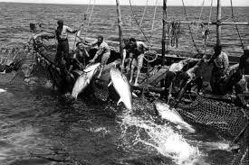 En 1715 la población contaba alrededor de 216 vecinos, cifra que aumentó a 2.700 a finales del siglo XVIII. Esta fuerte expansión demográfica se pudo realizar gracias, esencialmente, a una importante actividad pesquera basada en la pesca con almadraba (pesca de atunes durante su viaje de migración, a través de un cerco de redes), en la que sus habitantes se especializaron con gran fortuna, siendo sus habitantes conocidos en el arte del calado de almadrabas en toda la costa mediterránea…
