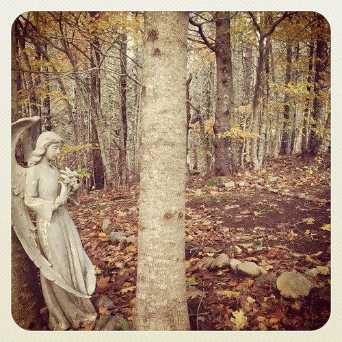 Tumblr   Angel in the woods