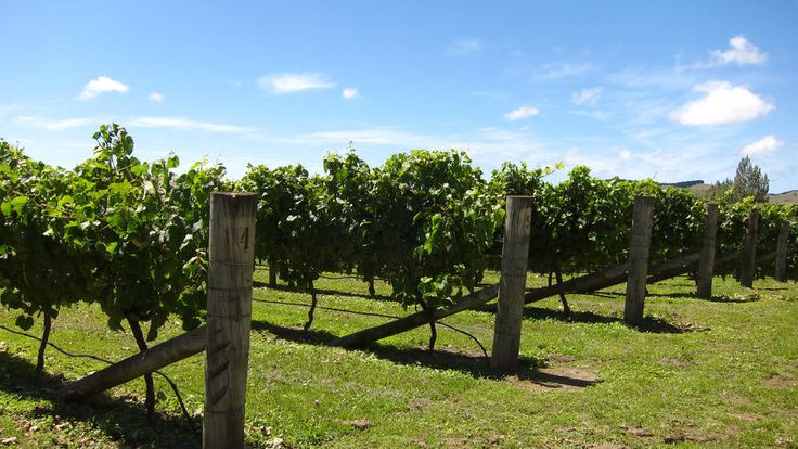 Like food and wine? Check out this great food and wine article from New Zealand #legatotravel