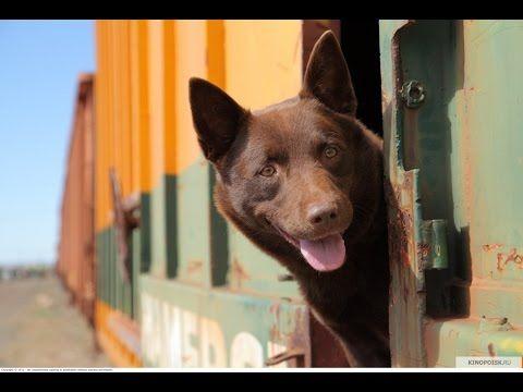 Рыжий Пёс / Офигенный фильм на реальных событиях / драма мелодрама комедия семейный - YouTube
