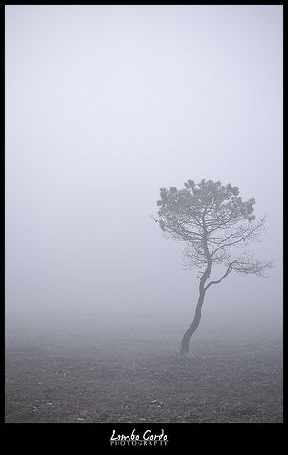 Soidade - Loneliness