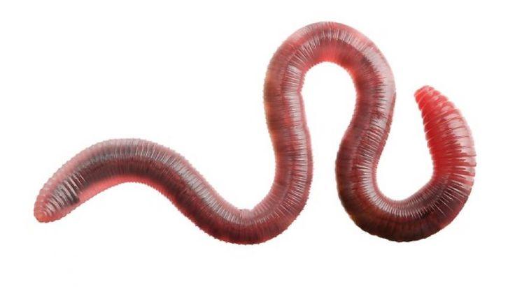 Een worm omdat ik daar heeeel erg bang voor ben.😞