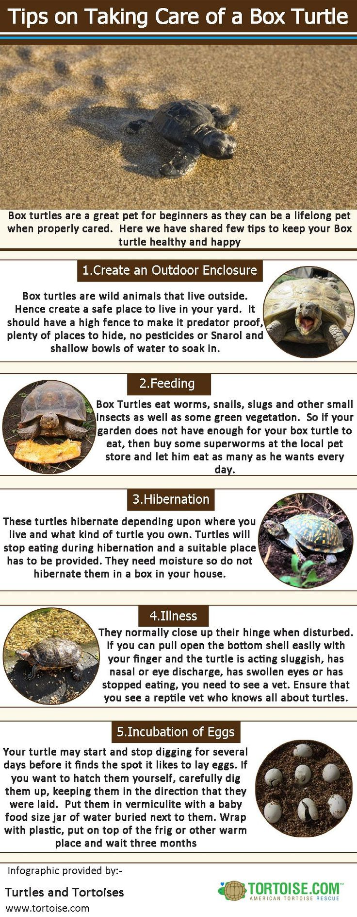 Box turtles are a great pet for beginners as they can be a lifelong pet when properly cared.  Here we have shared few tips to keep your Box turtle healthy and happy.Log on http://www.tortoise.com/