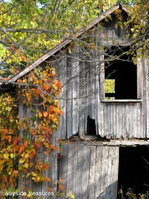 lovely #shabby old #barn   #autumn