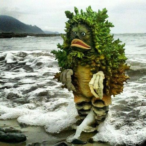 From out of the rolling waves came a creature I had not seen before...
