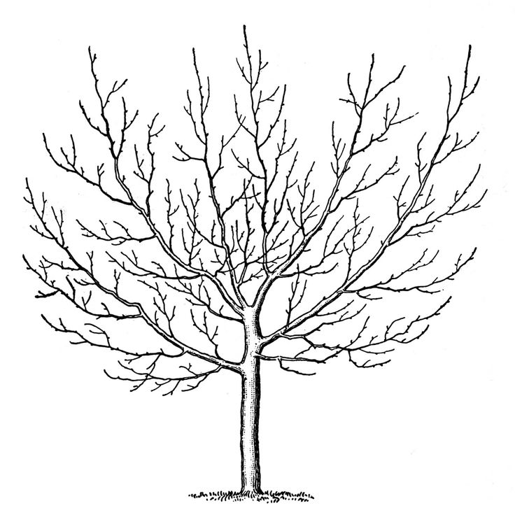 234 best trees etc. images on pinterest | drawings, drawing and fall - Cherry Blossom Tree Coloring Pages