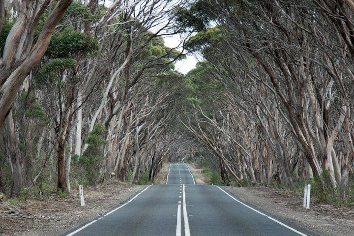 Kangaroo Island - South Australia