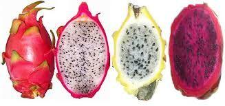 Fruit du dragon ou pitaya rose à chair blanche. C'est le fruit d'un cactus épiphyte originaire d'une zone assez large d'Amérique Latine. La plante se compose d'un ensemble de tiges rampantes, d'environ 6 à 12 m de longueur. Sa floraison nocturne blanche à l'agréable parfum rappelle celui de la vanille. Le fruit a l'épiderme rose vif recouvert d'écailles. Sa chair blanche est parsemée de très nombreuses petites graines noires. Ce fruit se consomme généralement frais. On le déguste…