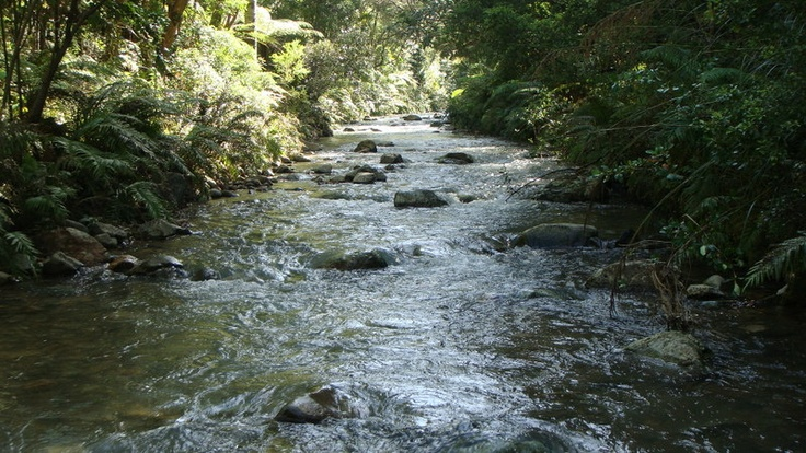 We got married beside this stream - so beautiful, Port Charles, NZ