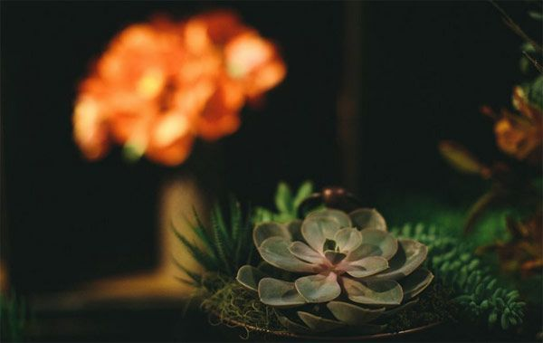 mesa-de-outono-pascoa-kira-festas-12