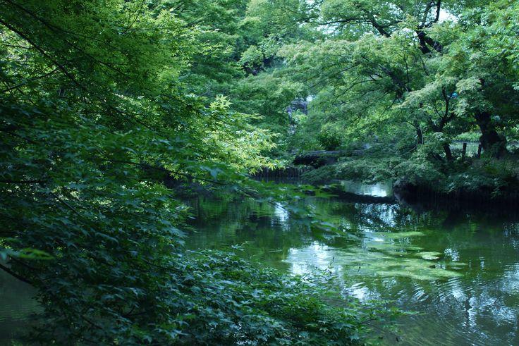 @Shin edogawa park