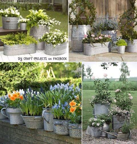 Galvanized container gardening