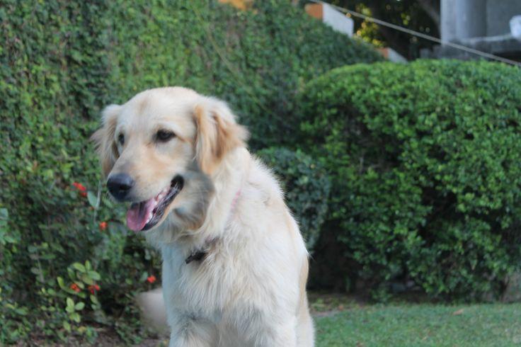 modelo perro #latasustentable