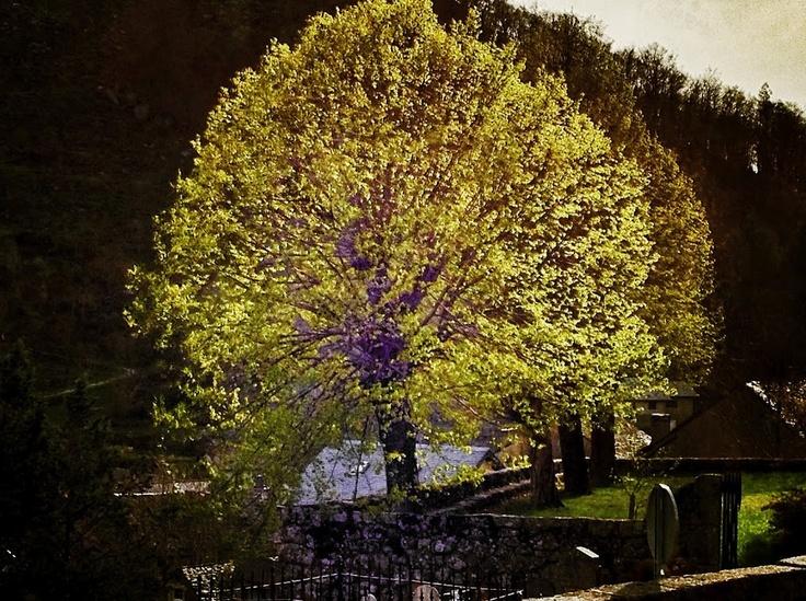L'arbre lumière de Pont de Monvert.  © Copyright Yves Philippe