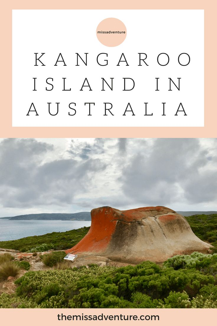 Planning a visit to Kangaroo Island? Here are 8 reasons why you must go! Read about my 3-day experience on Kangaroo Island. Here I tell you the must-see things to do and places to visit. Includes sand-boarding, gorgeous beaches - Stokes beach and Vivonne beach. Plus wildlife spotting on Kangaroo Island and wine tasting experience. | Things to do on Kangaroo Island | #australia #kangarooisland #australianbeaches #adventure #themissadventure