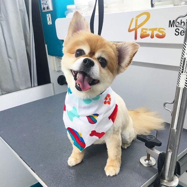 4PetsMobile mobilegrooming dogs doglover