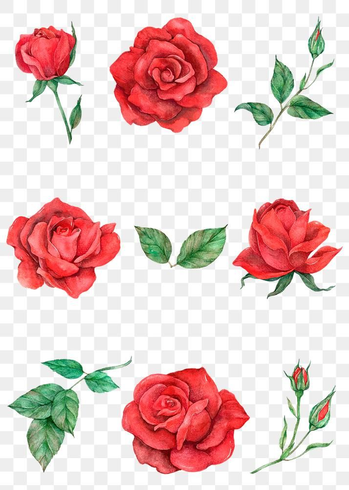 Rose And Leaf Png Set Transparent Background Free Image By Rawpixel Com Boom In 2020 Transparent Background Red Rose Flower Free Png