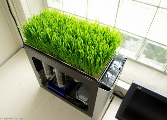 green computing, bio computer, computer plants, mike schropp, total geekdom, green computer plant, computer wheatgrass