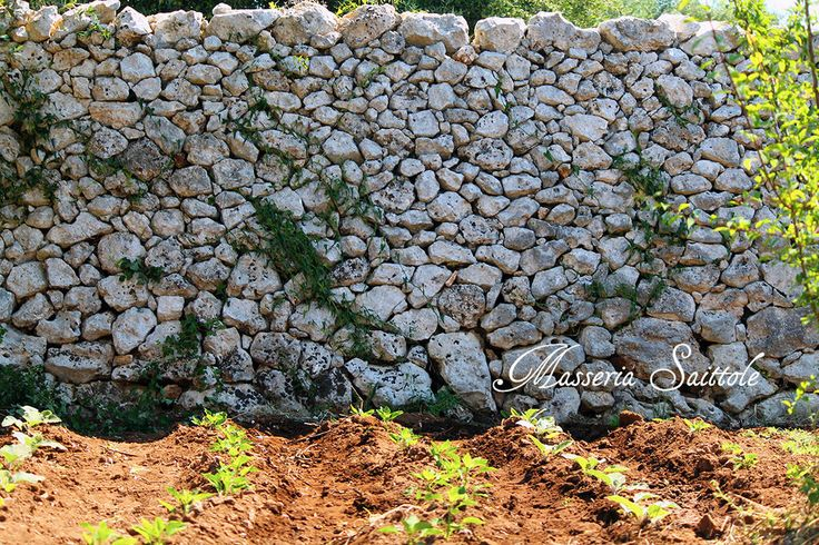 Dry stone walls and vegetables garden in Salento @saittole