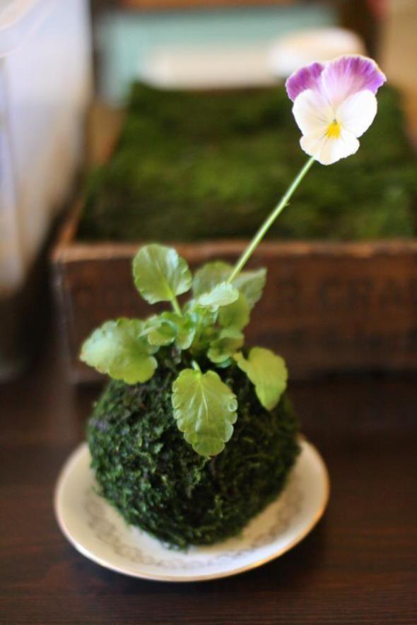 Come realizzare un Kokedama: piante pensili senza vaso! | Guida Giardino