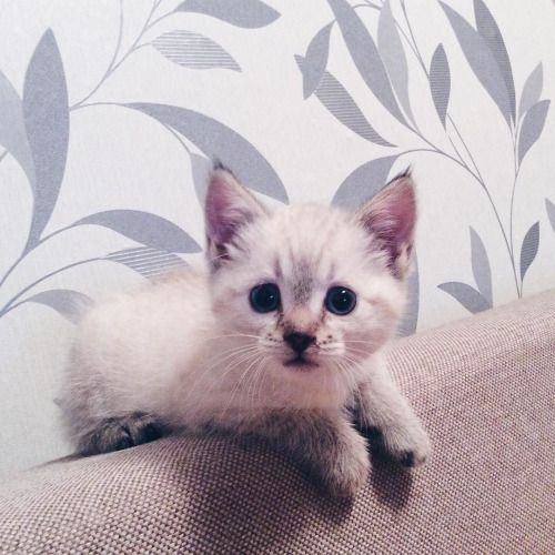 From http://ift.tt/1rYbHJZ Posted on May 20 2016 at 02:44AM by... Fluffy Cats Cats Kittens LOL Cats Cute Kittens Board