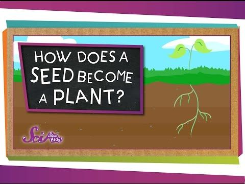 Videos About Plants - Simply Kinder
