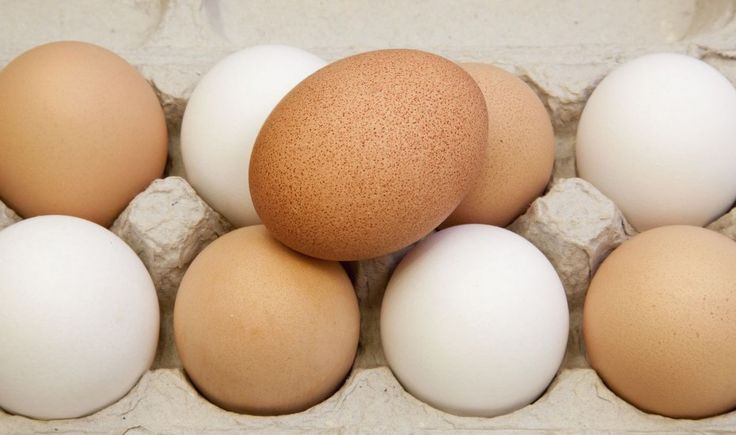 FAQ: Difference Between Large Eggs vs. X-Large Eggs? | Incredible Egg