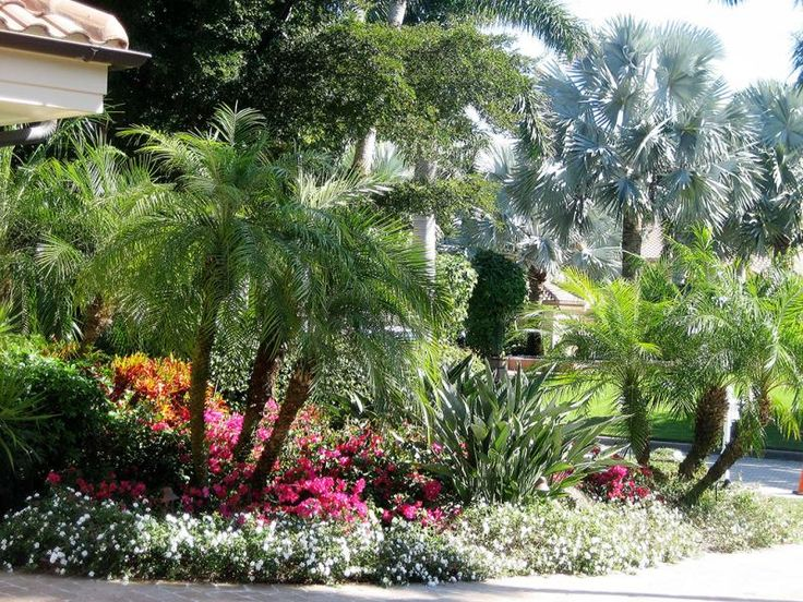 Best 25 tropical backyard landscaping ideas on pinterest for Tropical landscape