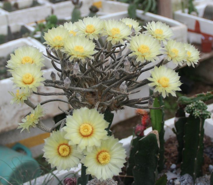 Top 10 Types of Cactus Plants - Top Inspired