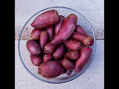 Barbabietole fermentate in salamoia - videoricette di conserve di verdure - YouTube