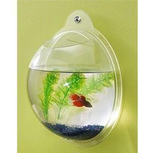 壁掛け金魚鉢。普通の金魚鉢も好きだけど、壁掛けの形もきれいだと思う。