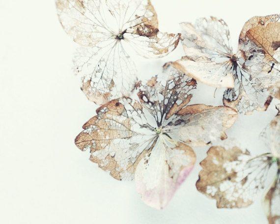 "Minimal nature wall art - botanical print - neutral naturalist - fine art natrue photography - beige lace white print 16x20 ""Flower lace"" (30.00 USD) by LupenGrainne"