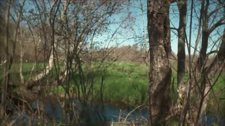 Strange happenings in the Hockomock Swamp - an excerpt from the documentary The Bridgewater Triangle