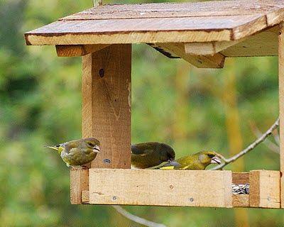 La voliera senza sbarre: Come costruire una mangiatoia per Uccelli