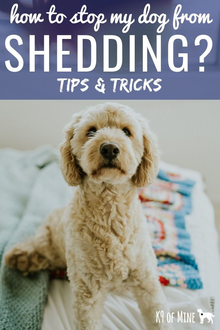 How To Stop A Dog From Shedding Tips Tricks For Taming The Fur
