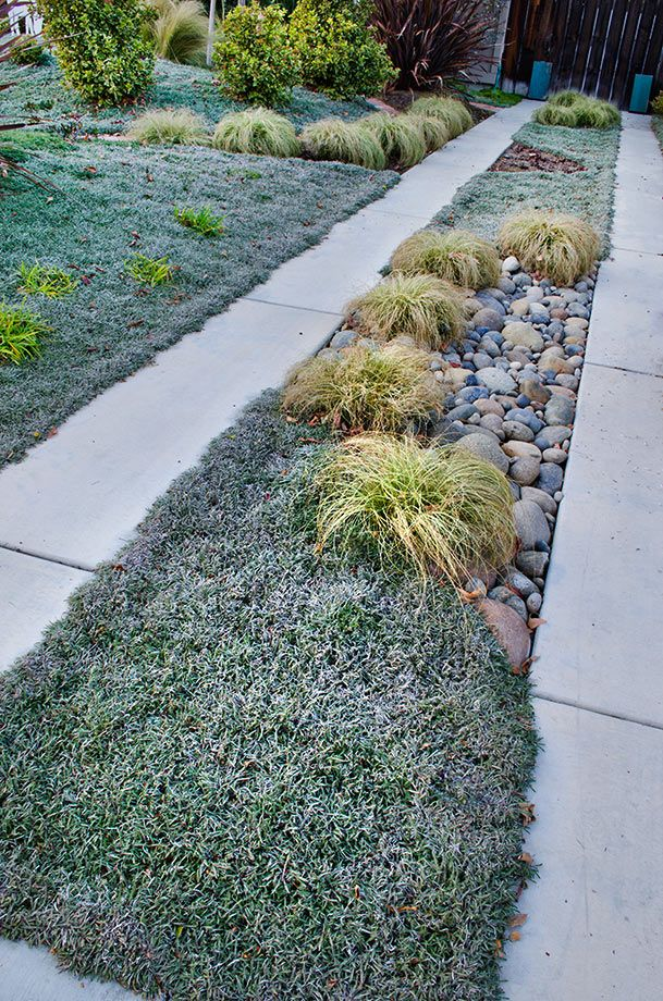 find this pin and more on groundcover ideas - Ground Cover Ideas