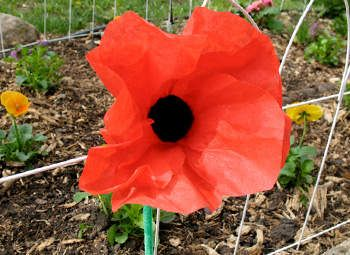 Coffee Filter Poppy Flowers Craft.. pretty easy to make and we can turn it into a pen.. and get some little clay pots with rice to hold them up.. good for home bound saints