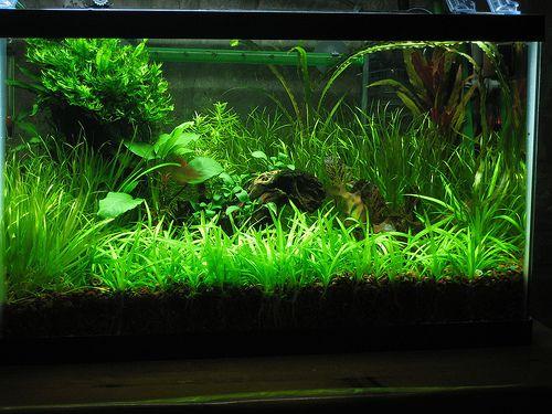 CO2 + Aquarium = awesome plants