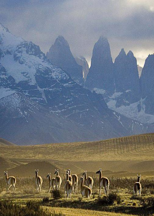 Patagonia                                                                                                                                                                                 More