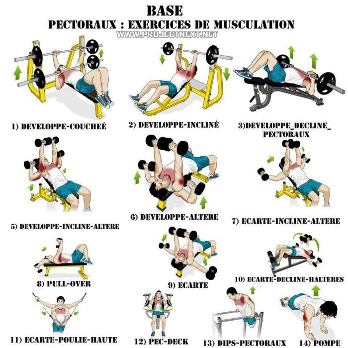 Best of Chest Workout - Exercises Healthy Fitness Bicep ...