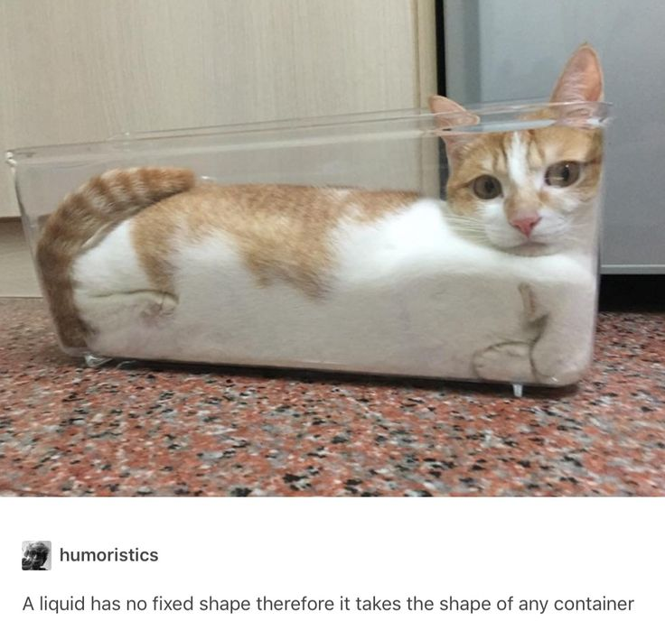 Best Cats Tumblr Ideas On Pinterest Funny Kittens Cat - 20 cat posts on tumblr that are impossible not to laugh at