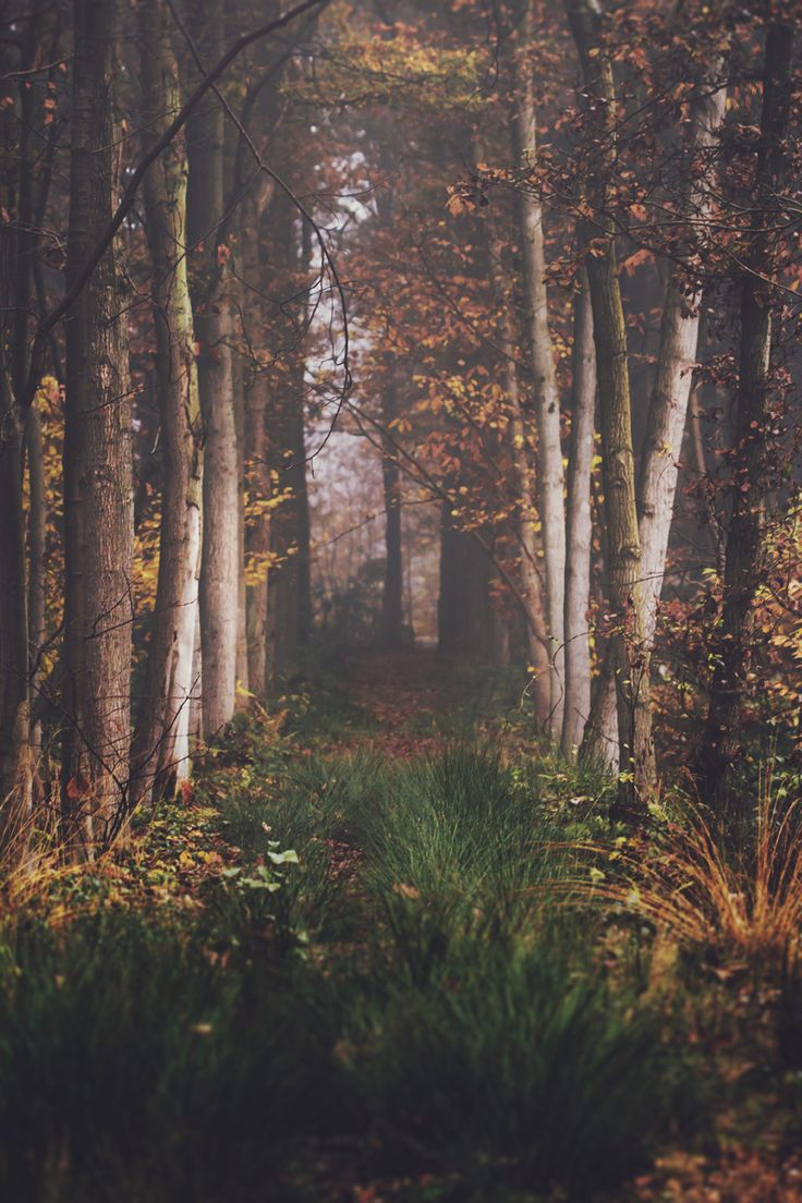 Ethereal landscapes nature photography by donna geissler - By Mathijs Delva