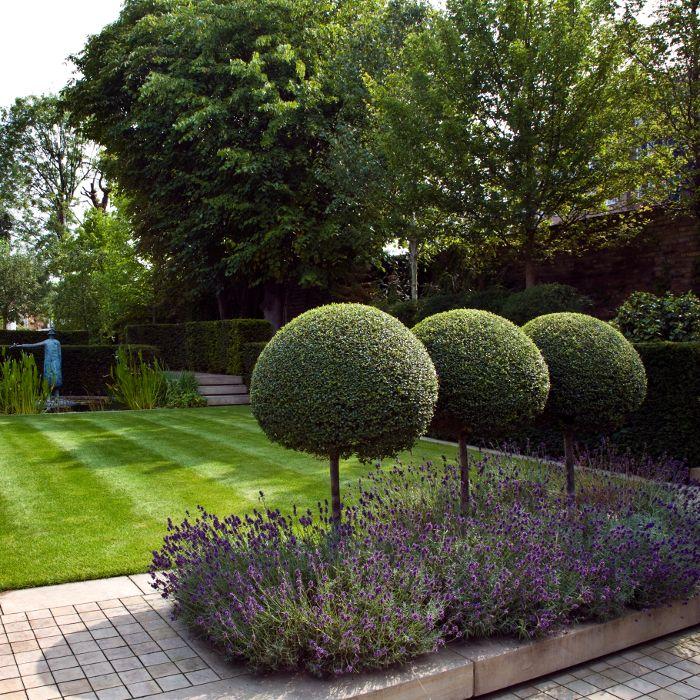 clipped topiary lollipops in lavender - Landform Consultants - Richmond